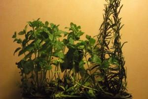 Herbes séchées Le Jardin de Guillaume 04