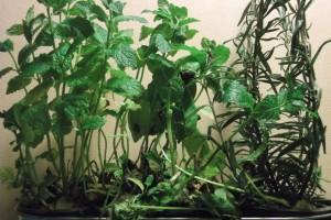 Herbes séchées Le Jardin de Guillaume 05
